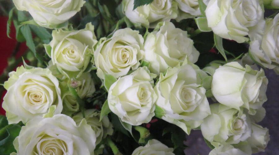 Soirées de la création – Bijoux floraux